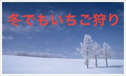 北海道のいちご狩りが冬の時期でも?口コミ人気No1のおすすめを紹介5