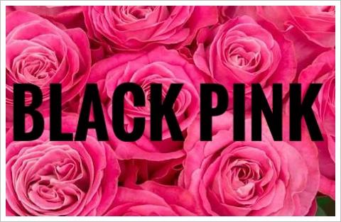 ブラックピンクが日本武道館で!チケット倍率や日程!場所や最寄駅も2