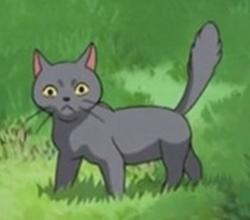 灰毛猫_ギブ